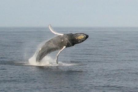 casino whale