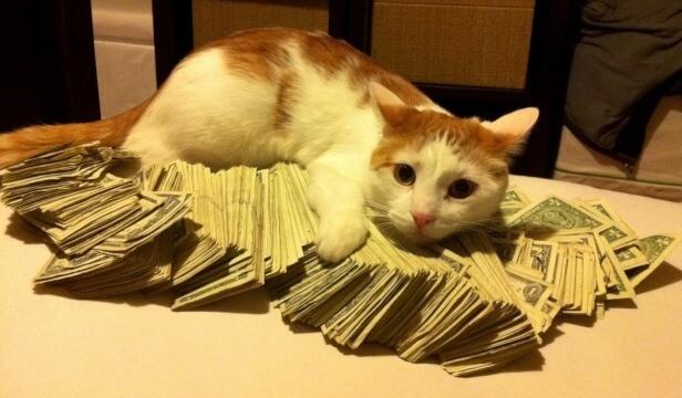 cute-internet-cat-hording-money