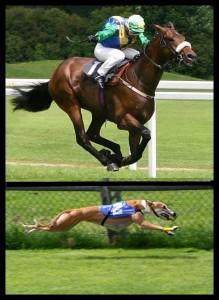 horse-dog-racing
