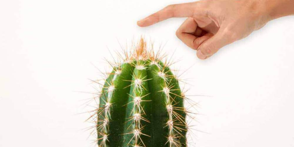 cactus and hand